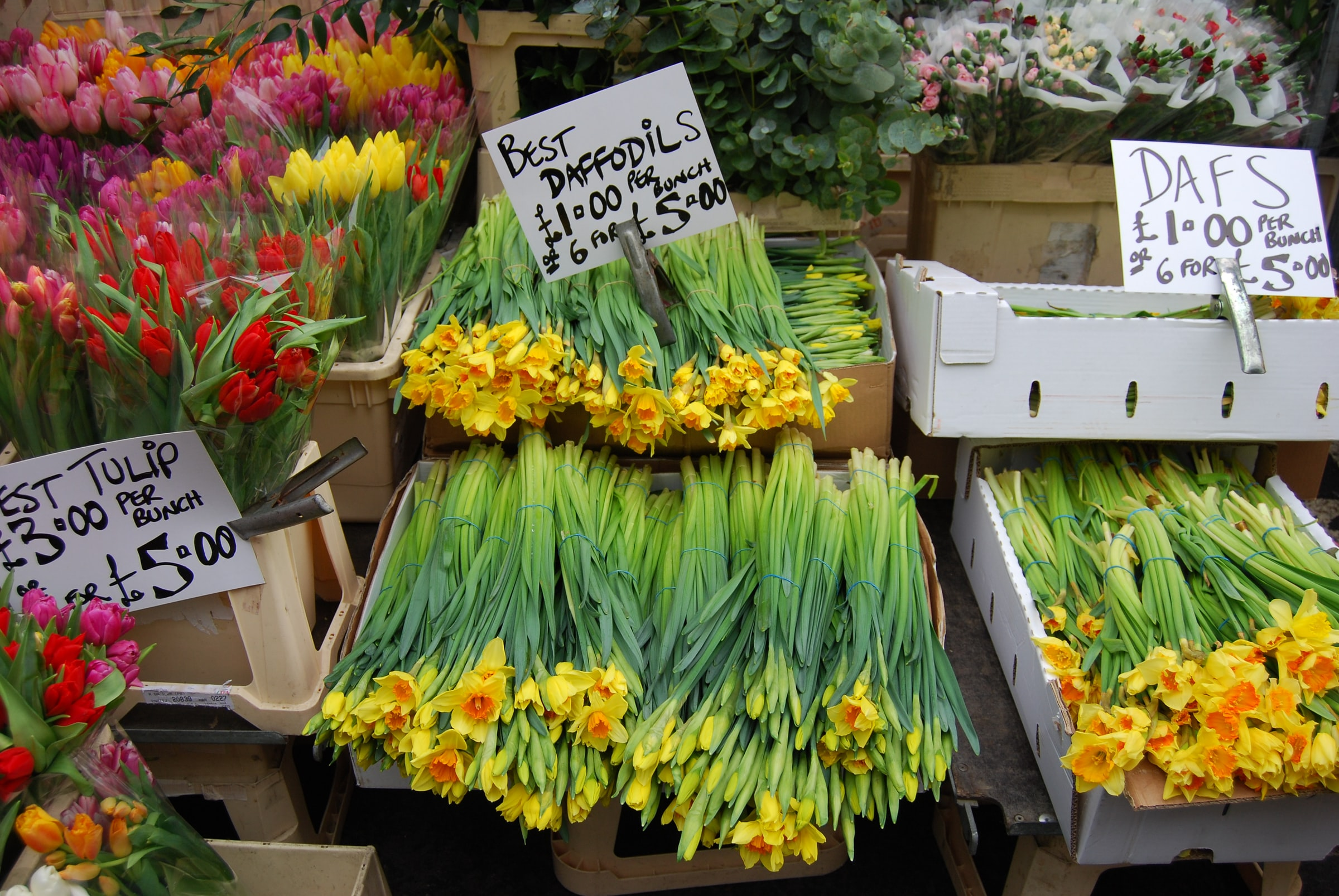 daffodils for sale in a flower shop
